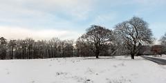 Bunterbomen (doevos) Tags: bos gelderland hogeveluwe npdhv nederland sneeuw veluwe winter forest neige snow woud