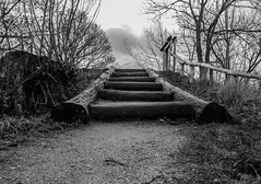 Stairway to Heaven (Filippo M. Conte) Tags: copenaghen denmark holiday winter christmas travel journey europe black white bw blackandwhite christiania stairway wood forest lake