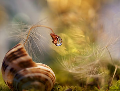 BOO !!! (miss gecko) Tags: fright scare scarey shell dandelions waterdrop macro