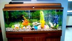 Library aquarium! 365/10 (Maenette1) Tags: spiespubliclibrary aquarium fish plants rocks water glass menominee uppermichigan flicker365 michiganfavorites