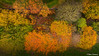 Above the canopy - Autumn Colours (Steve Samosa Photography) Tags: autumntrees tree woods woodlands forest aerialview topdownview dronecamera drone droneshot sthelens england unitedkingdom gb aerial