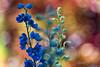 summer memories (mariola aga) Tags: chicagobotanicgarden glenco summer garden plants flowers bokeh thegalaxy coth alittlebeauty coth5
