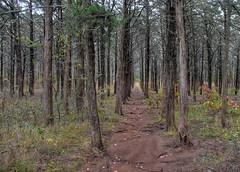 2017 - Wichita Mountains Wildlife Refuge (zendt66) Tags: zendt66 zendt nikon d7200 wichita mountains wildlife refuge camping hiking lawton oklahoma