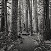 Stillness of the Morning (Scott Withers Photography) Tags: salmonhuckleberrywilderness salmonriver mthood oregon sonya7rii zeissloxia35mmf2