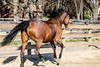 IMG_7233 (Tyler Ochs Photography) Tags: horses horse halter