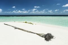 Maldives (Lee Armstrong Jones) Tags: holiday hotels maldives ellaidhoo cinnamon canon 5d mkiii 24105mm bluesea bluesky beachhoilday stingray tuna jelly fish seaplane bat seaurchin dronephoto mavic pro 100400mmm gopro hero5 1740mm wideangle lens eel ef1740mmusm canon5dmkiii 100400mm water resort island usm beach sea sky mavicpro