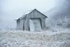 Frosty old shed (Helena Normark) Tags: frost winter weatheredshed oldshed decayingshed ust uståsen trondheim sørtrøndelag norway norge sonyalpha7ii a7ii voigtländer cv5015 nokton5015 nokton50mmf15