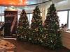 I Saw 3 Trees - Frankfurt, Germany - November 2017. (firehouse.ie) Tags: yuletide yule festive holidayseason holidays xmas christmastime christmas 2017 november2017 deutschland germany frankfurtammain frankfurtmain frankfurt trees tree