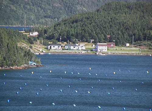 Mussel Farm in Twillingate Harbour, Newfoundland