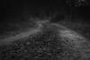 old road (sharken14) Tags: tree grass road wood graso gräsö uppland sweden monochrome monday svartvitt landscape väg grusväg höst nikon d750