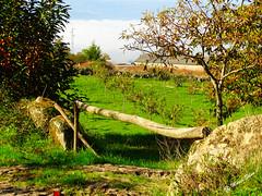 Águas Frias (Chaves) - ... a cancela ... singela ... (Mário Silva) Tags: aldeia águasfrias chaves trásosmontes portugal ilustrarportugal madeinportugal lumbudus máriosilva dezembro 2017 outono cancela campo paisagem