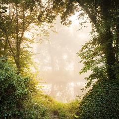 Passage (jasontheaker) Tags: knotfordnook wharfedale dales autumn sunrise dawn mist fog fishing wharfe