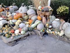 Halloween Pumpkin Display, Madrid's Royal Botanical Gardens (d.kevan) Tags: spain halloweendisplays vegetables pumpkins madrid botanicgardens