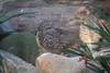 IMG_2722 (neatnessdotcom) Tags: new york city nyc bronx zoo tamron 18270mm f3563 di ii vc pzd canon eos rebel t2i 550d