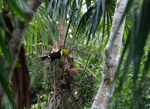 Belize Wildlife_012