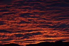 Sunset 11 17 2017 042 (Az Skies Photography) Tags: sun sky skyline skyscape arizona az arizonasky arizonaskyline arizonaskyscape november 17 2017 november172017 111717 11172017 cloud clouds red orange yellow gold golden salmon black canon eos 80d canoneos80d eos80d canon80d set sunset dusk twilight nightfall arizonasunrise casa grande casagrande casagrandeaz