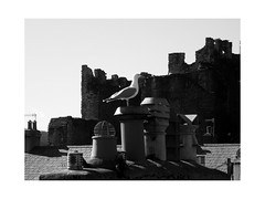 you look nice today (vfrgk) Tags: seagull chimneys sunny roofs monochrome bnw bw blackandwhite lightandshadows seagulls castle