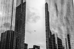 threading the needle (Brinkervelt.) Tags: chicago buildings architecture bird bw blackandwhite blackwhite monochrome sky clouds noiretblanc cmwdblackandwhite cmwd urban