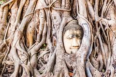 Wat Mahathat (Anthony Gehin) Tags: buddha head temple wat mahathat ayutthaya roots thailand
