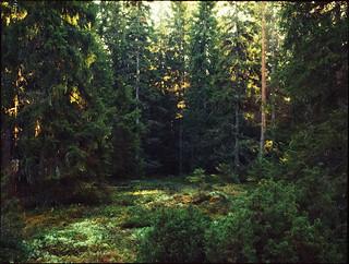Uppländsk skog