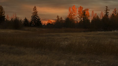 Cherishing the moment... (Jan.Timmons) Tags: pacificnorthwest2017 jantimmons sunset facingeast bellyshot groundphoto thebackforty hectares fun chilly snow landscape pink reddish hay tallgrasses inthemoment 7dwfsábadossaturdayslandscapes smileonsaturday vividorange