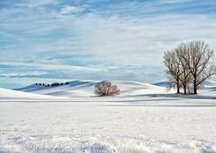 Winter on the Palouse (Philip Kuntz) Tags: palouse snow winter pastoral easternwashington washington nearhome