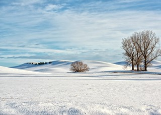 Winter on the Palouse
