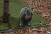 Australia 2017 (margauxsauvage02) Tags: australie brisbane byronbay fraserisland newcastle noosaheads portmacquarie rainbowbeach