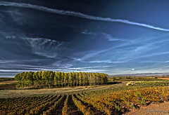 Chopera 02 HDR.- Poplars 02 HDRNº 246 (Yon Ibarrra (+ 1.000.000 VISITAS)) Tags: poplars arboles chopera trees chopo hdr nikon 1024mm otoño autumn colors red orange blues sky skyporn viñas vineyards cepas strains autumncolors larioja badaran españa spain europa