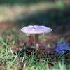 Fungi (bamboosage) Tags: helios 402 1585 preset m42 russia