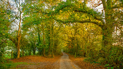 The Enchanted Lane in Autumn (paulapics2) Tags: lane gate autumn fall outdoor branches leaves nature november morning canon canoneos5dmarkiii canonef2470mmf4lisusm countryside secret fairytale essex
