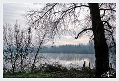 Petit matin d'automne en bord de Loire / Autumn early morning on the banks of the Loire- Luynes (christian_lemale) Tags: automne autumn fleuve rivière river loire ciel sky eau water luynes touraine france nikon d7100