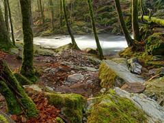 Savoureuse river at Lepuix