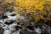 Colorful Creek (maberto) Tags: cali california d7200 easternsierras nikon october sierranevada sierras fallcolor landscape leaves mountains trees water ©bradmaberto
