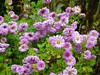 2017 Germany // Unser Garten - Our garden // im November // (maerzbecher-Deutschland zu Fuss) Tags: 2017 garten natur deutschland germany maerzbecher garden unsergarten november