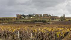 _MG_4250 (jacques vallet) Tags: sauterne vin yquem chateaux