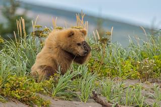 Worried Bear   3I8914