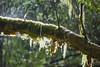 Rain forest (Ian@NZFlickr) Tags: rain forest moss catlins otago nz