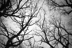 Winter Trees (Sean Anderson Media) Tags: tree sky winter blackandwhite monochrome oaks woods nature forest sonya7rii fotodiox lensadapter loreolensinacap loreo lofilens lofi silhouette 35mm vignette softlens plasticlens