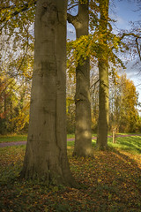 Autumn 2017 (Pieter Mooij) Tags: dordrecht aposummicronm50mmasph leicam240 leica trees baueme baum bomen boom herbst herfst autumn autumn2017 herfst2017 herbst2017 herfstkleuren autumncolors herbstfarben
