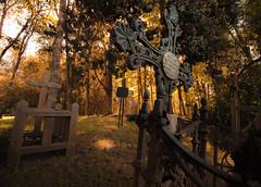 Cementerio de la Colonia Germana (Cruz-Monsalves) Tags: cemetery forest cementerio bosque otoño autumm cruz cruces cross crosses nature natural naturaleza