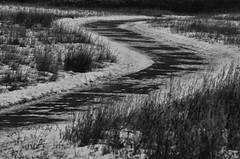 Winter Path (pokoroto) Tags: winter path calgary カルガリー アルバータ州 alberta canada カナダ 11月 十一月 霜月 jūichigatsu shimotsuki frostmonth autumn fall 平成29年 2017 november bw