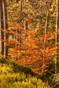 Bruar Forest (Briantc) Tags: scotland perthshire perthandkinross pitlochry bruar forest timber