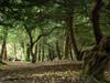 chillingham castle, the park (violica) Tags: inghilterra england granbretagna greatbritain regnounito unitedkingdom chillingham chillinghamcastle castellodichillingham northumberland parco park bosco wood alberi trees sottobosco understory