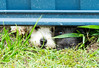 Chatting under the fence (MarkAurelius) Tags: fence dogs neighbours keenness friendly fur black white snout nose