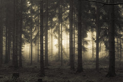 Stand by us (Netsrak) Tags: eu europa europe forst natur nebel wald fog forest mist nature woods