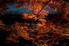 裏庭が燃えています/The backyard is on fire (Smoking room) Tags: 紅葉 太宰府 28mm 秋 voigtlander 火事 瓦 autum leaves fire