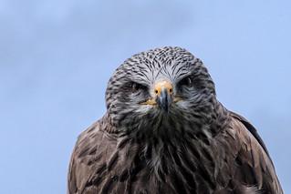 A hard stare
