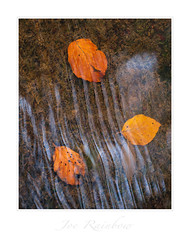 """Jewels"" - Gweek, Cornwall (Joe Rainbow) Tags: joerainbow leaves autumn fall water seasonal reflection flow"