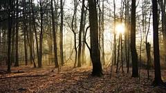 Morning in a forest (pszcz9) Tags: polska poland przyroda nature natura las forest forestimages słońce sun wschódsłońca sunrise mgła fog mist landscape pejzaż beautifulearth sony a77